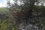PožarVid (4)