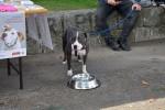 Međunarodni dan zaštite životinja, Buddy, Zaklada Kajo Dadić (3)