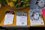 Međunarodni dan zaštite životinja, Buddy, Zaklada Kajo Dadić (6)
