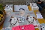 Međunarodni dan zaštite životinja, Buddy, Zaklada Kajo Dadić (7)