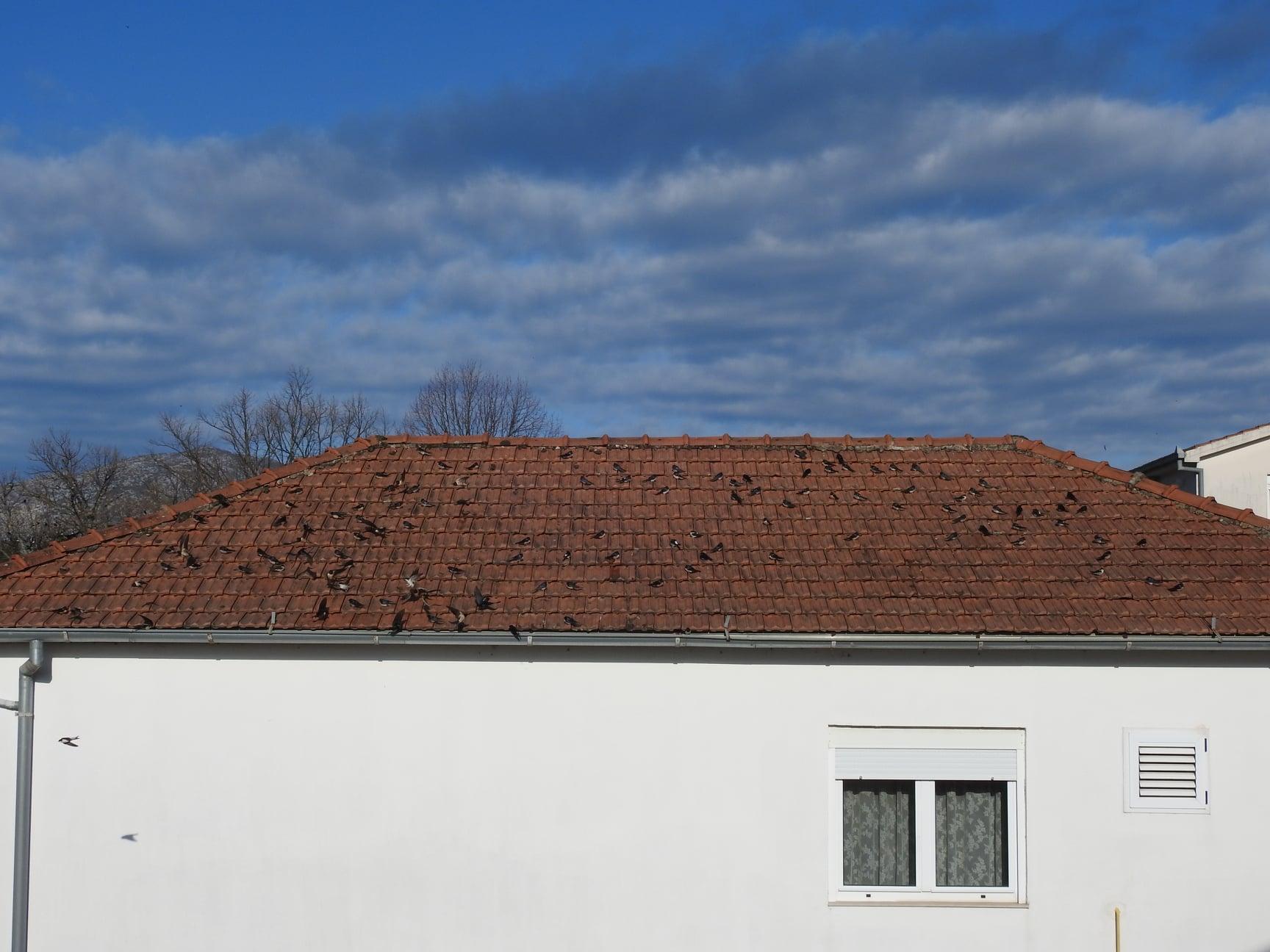 ptice na krovu