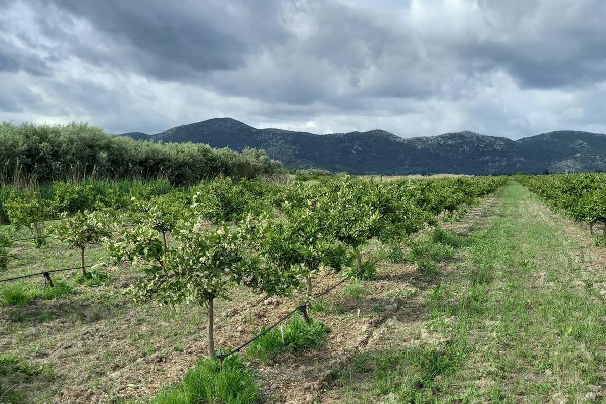 Dolina Neretve, poljoprivreda